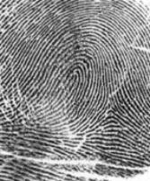 Whorl Loop Fingerprint Patterns